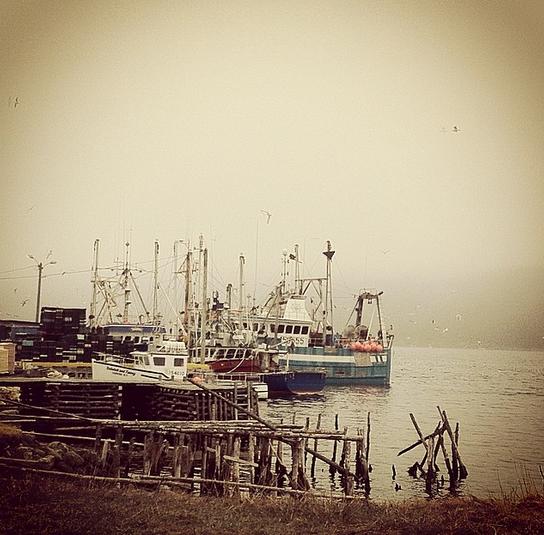 Cape Broyle